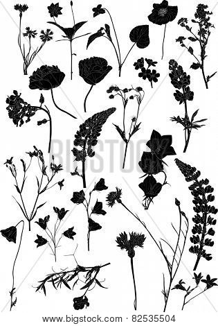 illustration with wild flowers silhouettes isolated on white background