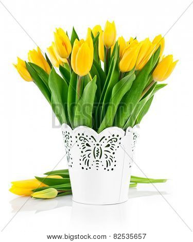 Bunch yellow spring tulips in bucket. Isolated on white background