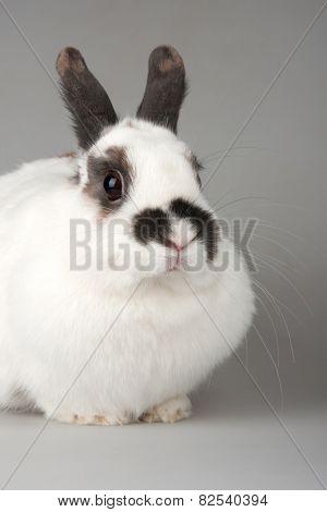 white rabbit with blask spots