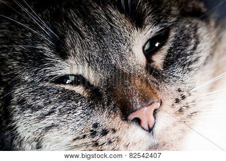 Cute cat close-up portrait. Sleepy, happy time. Adorable kitten series.