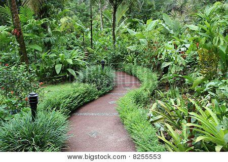 camino en la selva tropical de costa rica