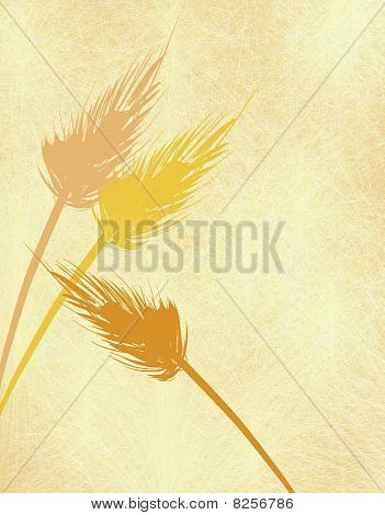 Fall Harvest Wheat Background