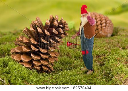 Old garden gnome with miniature basket standing in front of a pinecone