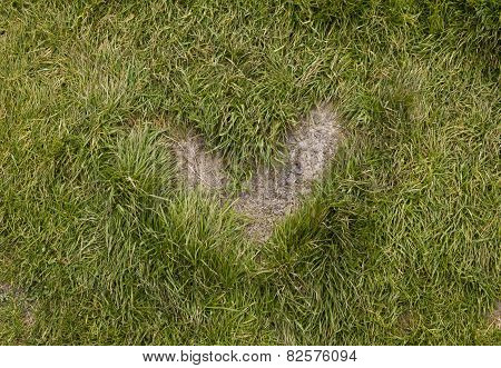Heart Shape Grass In A Path
