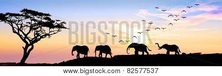 wild elephants in the field