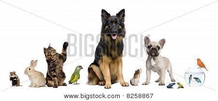 Group of Pets in front of white Background zusammen