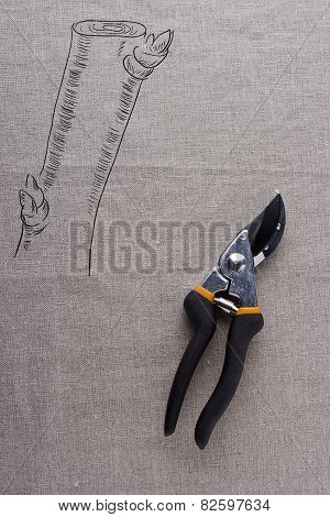 Scissors For Trimming Branches