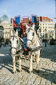 picture of harness  - Two horses harnessed to the carriage Dresden Germany - JPG