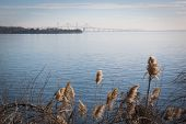stock photo of suspension  - The Chesapeake Bay Bridge in Stevensville - JPG
