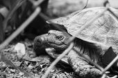 foto of crawling  - Tortoise trapped in a cage and tortoise crawling - JPG