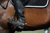 pic of girth  - Close up of rider leg with spur sitting on brown horse
