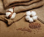 foto of flax plant  - Cotton plant flower with flax seeds on hessian sack textile background - JPG