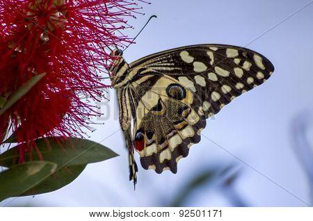 Swallowtail Landing
