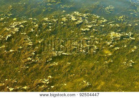 Overgrown River Bottom