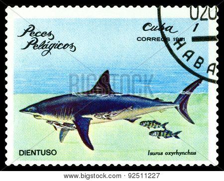 Vintage  Postage Stamp. Isurus Oxyrhynchus.