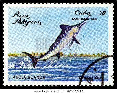 Vintage  Postage Stamp. Tetrapturus Albidus.