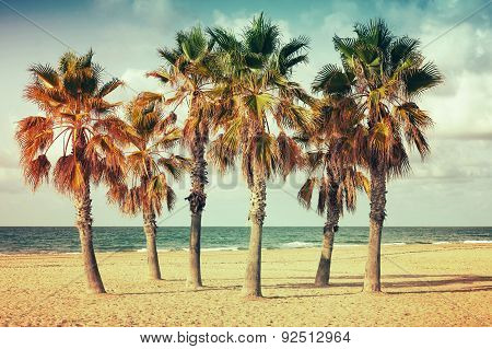 Palm Trees Grow On Empty Sandy Beach In Spain
