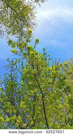 Spring Tree Branches On Blue Sky