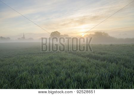 beautiful sunny morning in a field near the village