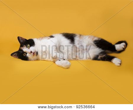 Tricolor Cat Lies On Yellow