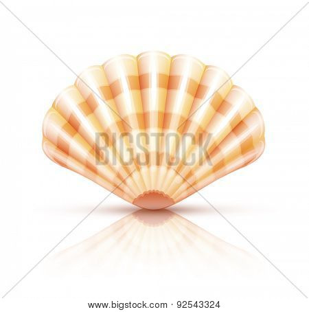 Shellfish seashell. Eps10 vector illustration. Isolated on white background