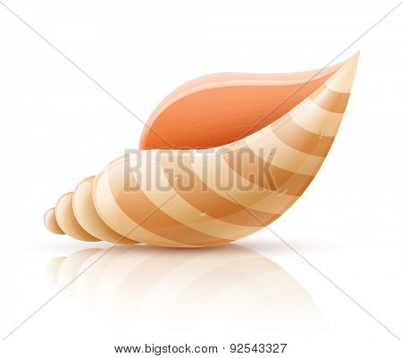Sea shell. Eps10 vector illustration. Isolated on white background