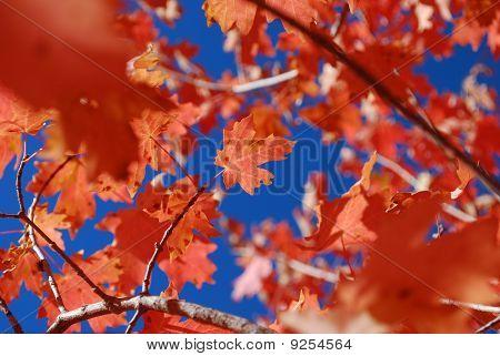 Little Leaf hanging on