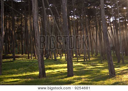 Sunlight in San Francisco's Presidio