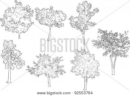 illustration with seven tree sketches isolated on white background