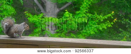 Squirrel On Ledge