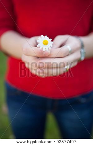 Woman hands holding a daisy. Spring begins . Focus in the flower