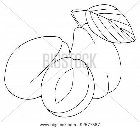Delightful garden - Two plums