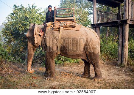 Elephants walking