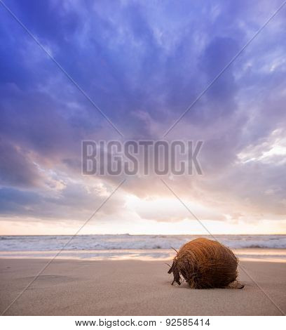 Cocont on the beach at sunrise  in Koh Samui island, Thailand.