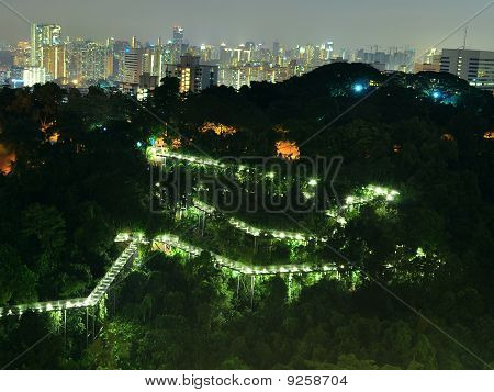 forest walkway with cityscape at background