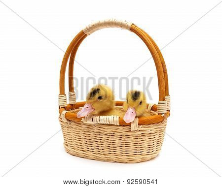 Little Ducklings Sitting In A Basket On A White Background