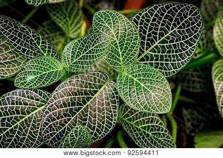 Nice green leafs - abstract natural background