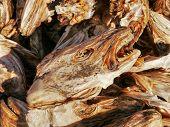 pic of lofoten  - Dried fish heads on the sun - JPG