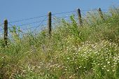 pic of barbed wire fence  - the barbed wire fence of a military unit in the countryside in Bulgaria in the spring - JPG