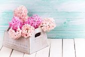 image of blush  - Background with fresh blush pink hyacinths in wooden box on white wooden planks against turquoise wall - JPG