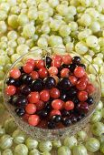 foto of black-cherry  - A bowl of red and black cherries surrounded by green gooseberries - JPG