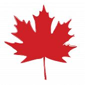 pic of canada maple leaf  - Maple Leaf Silhouette for your design - JPG