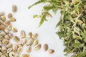image of cannabis  - Close view of hemp seeds and dried cannabis twig in a white background - JPG