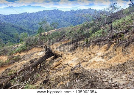 Rain forest destroyed to make way for oil palm plantations in Borneo, Malaysia. Environmental issue.