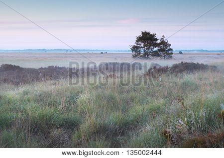 misty marsh at sunrise in summer Netherlands