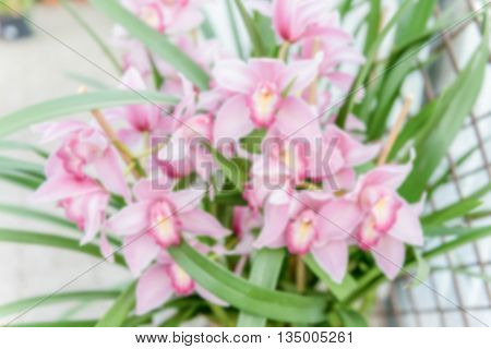 Defocused Background Of Beautiful Pink Phalaenopsis Orchids