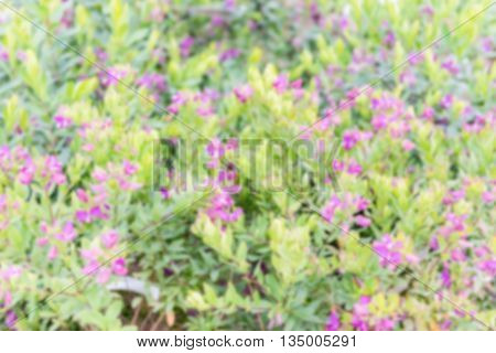 Defocused Background Of Bushes With Green And Purple Flowers