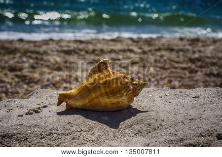 Shell of clam on the beach close-up