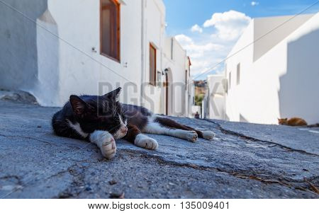 lazy sleeping kitty lying on stone street