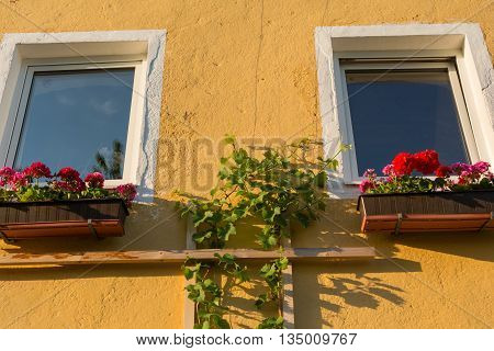 flower-box on Window with balcony flowers Geraniums